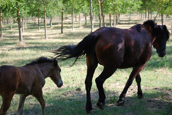 cavalli-agriturismo-bevagna